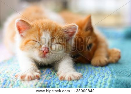 A ginger and white kitten stretching next to it's sleeping litter mate