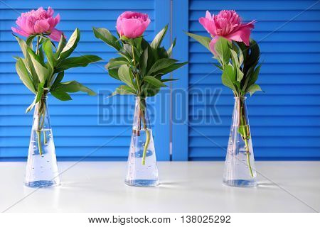 Beautiful peony flowers on blue folding screen background