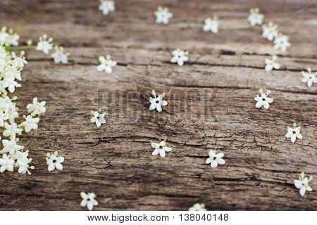 Old wood with small white flowers on it, copyspace. Wooden background with honky summer blossom, romantic style