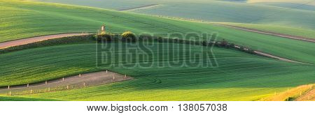 Green spring fields, color summer ground waves