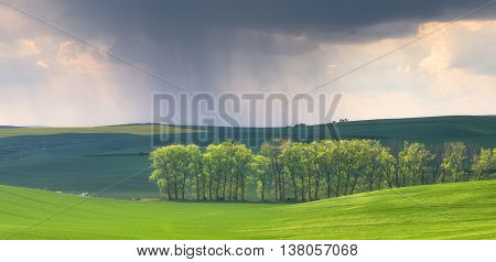 Rain in the spring fields, color summer ground waves