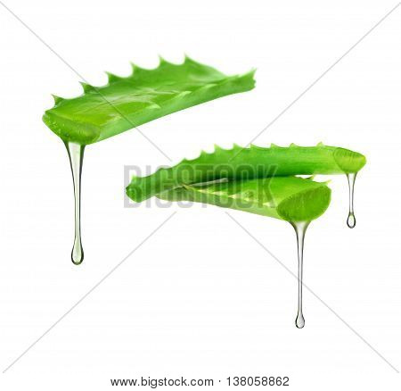 Essence from aloe vera plant drips from the leaves