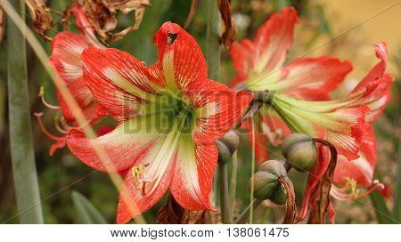 flor naturaleza color vida jardín mundo planta