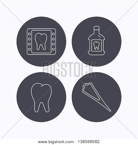 Mouthwash, tooth and dental x-ray icons. Tweezers linear sign. Flat icons in circle buttons on white background. Vector