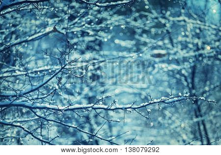 Picturesque snow-covered forest in the winter