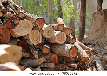 pyre pile of wood for firewood to make coal