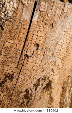 Crackled Trunk Diagonal