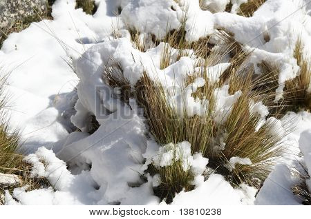 Snowcovered grass in the morning