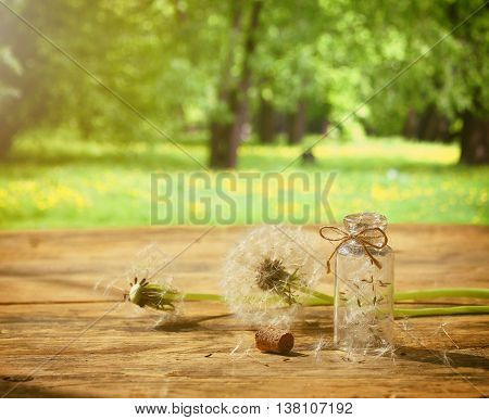 Summer background with dandelion on wooden table small bottle with seeds retro style