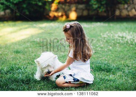 Child feeding English Highland White Terrier dog on grass in the backyard