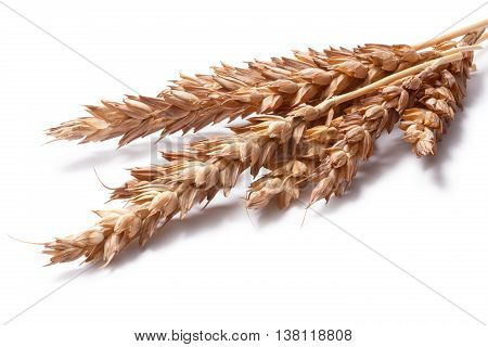 Wheat Ears (triticum Spp), Clipping Paths