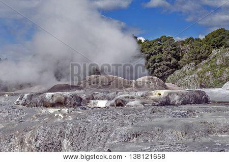 Whakarewarewa Geyser at Te Pui thermal park in geothermal valley of Rotorua New Zealand poster