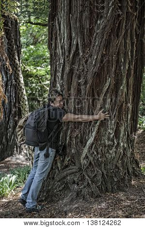 Young man hugging a big pine tree in the forest