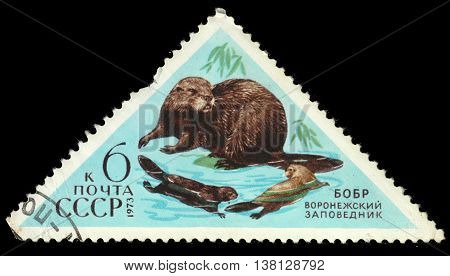 USSR - CIRCA 1973: a post stamp printed in the USSR shows an animal with the inscription