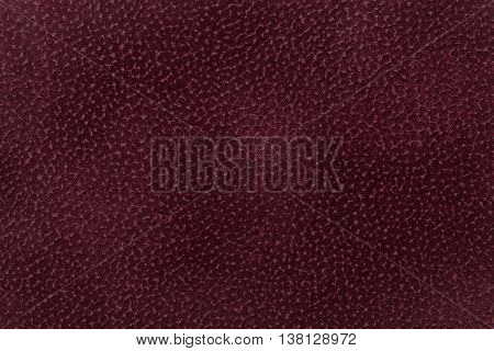 Background of dark red and purple fabric flock decorated with a coat of the animal. Lint-free cloth suede.