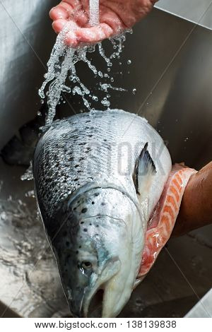 Hand of man washing fish. Big fish under water flow. Fresh ingredient for healthy meal. Look at this beauty.