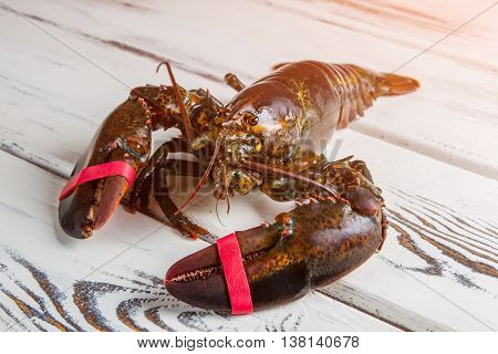 Whole raw lobster. Raw lobster on wooden surface. Who tied me up. Crustacean of dark color.