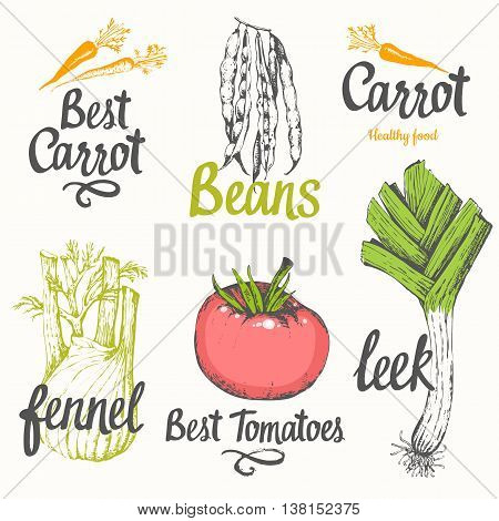 Vector illustration with label of tomato fennel carrots onions leeks beans peas. Fresh organic vegetable in provencal style.