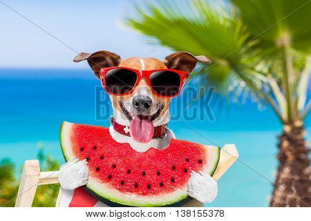 Dog On Hammock And Watermelon