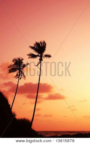 Palm on sunset of sea coast