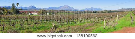 Stellenbosch Grape Farm, Cape Town South Africa