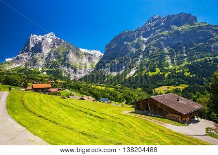 Panorama View To Famous Grindelwald Valley, Green Forest, Alps Chalets And Swiss Alps (schreckhorn,