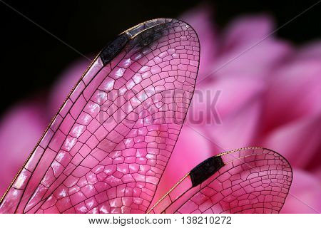 Wings of a dragonfly transparent impression of stained-glass