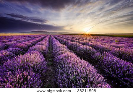 Beautiful landscape with sunrise and dramatic clouds over lavender field
