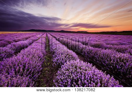 Beautiful landscape in morning lavender field (Bulgaria)
