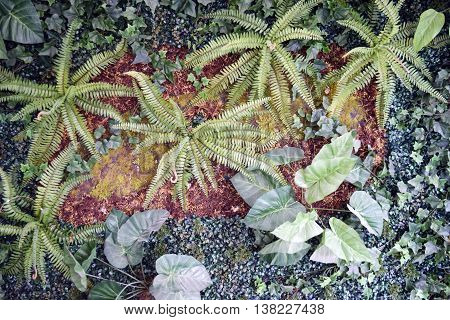 Wall of plants (ferns ground cover moss)