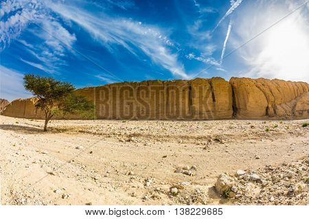 The stone desert in mountains of Eilat, Israel. Wood Acacia / Acacia gerrardii / in the Black Canyon