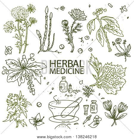 Herbal medicine doodle hand drawn elements sketch vector illustration