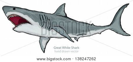 Great white shark isolated on white shark attack hand drawn vector