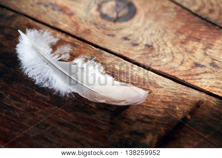 Bird feather on old wooden board with free space for text