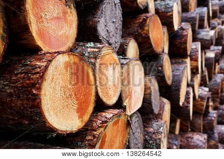 Logging Industry - Pile of Freshly Chopped Tree Trunks from Sustainable Wood Source