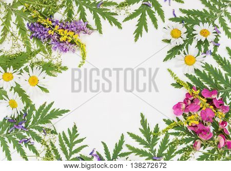 Frame with fresh branches green leaves herbs chamomile vetch and other multicolored wildflowers on white background; top view flat lay overhead view
