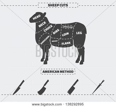 Cuts of lamb meat. American method. Vector illustration.