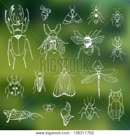 set insects on a blurred background ,collection of insects drawn in ink