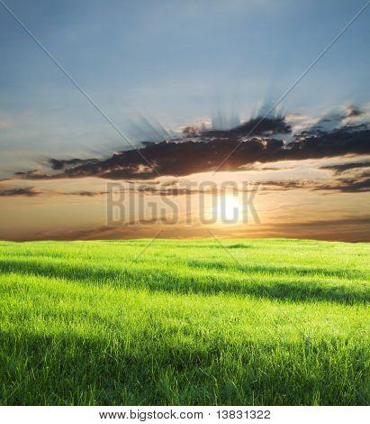 Green field on sunrise