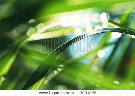 grass in water
