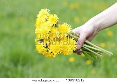 festive bouquet of fresh lush dandelions for mom