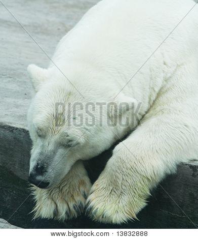 Sleeping bear