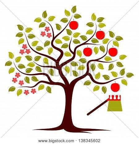 vector apple tree in two seasons and fruit picker isolated on white background