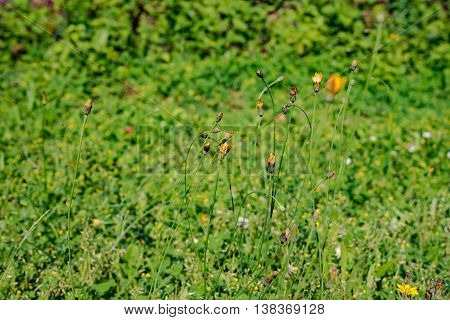 Close up on fresh green grass texture background in Germany