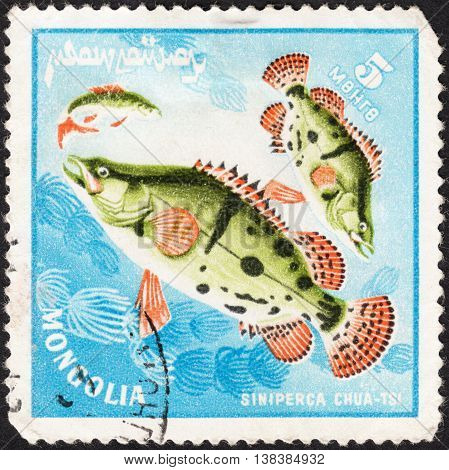 MOSCOW RUSSIA - JANUARY 2015: a post stamp printed in MONGOLIA shows the fishes with the inscription 'siniperca chuatsi' series circa 1978