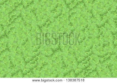 fresh green clover leaves pattern for background