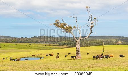 A cattle farm near the towns of Nornalup and Walpole in Western Australia.