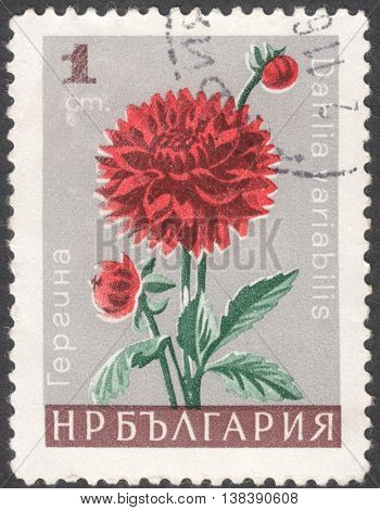MOSCOW RUSSIA - CIRCA JANUARY 2016: a post stamp printed in BULGARIA shows a flower with the inscription