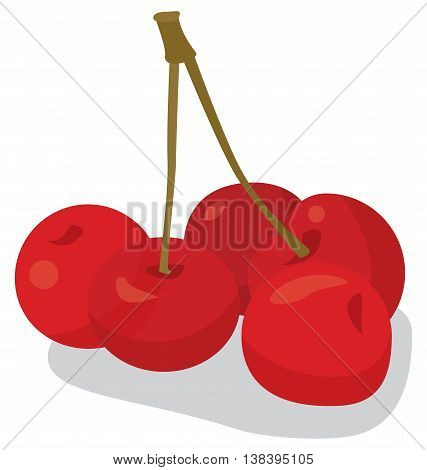 handful of ripe red sweet cherries on isolated background