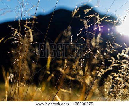 Horizontal Vivid Vibrant Yellow Norway Grass Landscape Backgroun